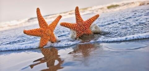 5 motive pentru care trebuie sa vii de 1 mai la mare